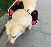 听说球鞋能拯救单身狗