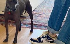 本月底登场!重磅 Travis Scott x Nike SB Dunk Low 联名不要错过